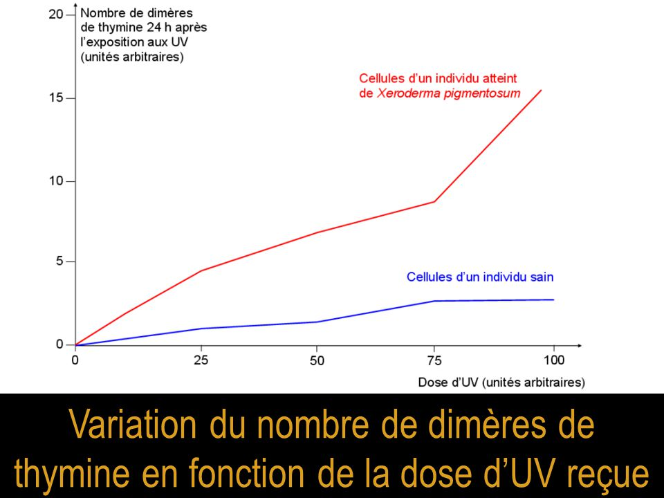 Variation du nombre de dimères de thymine en fonction de la dose d'UV reçue
