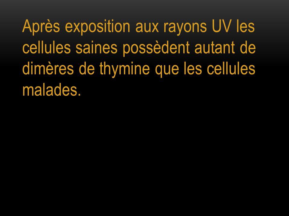Après exposition aux rayons UV les cellules saines possèdent autant de dimères de thymine que les cellules malades.