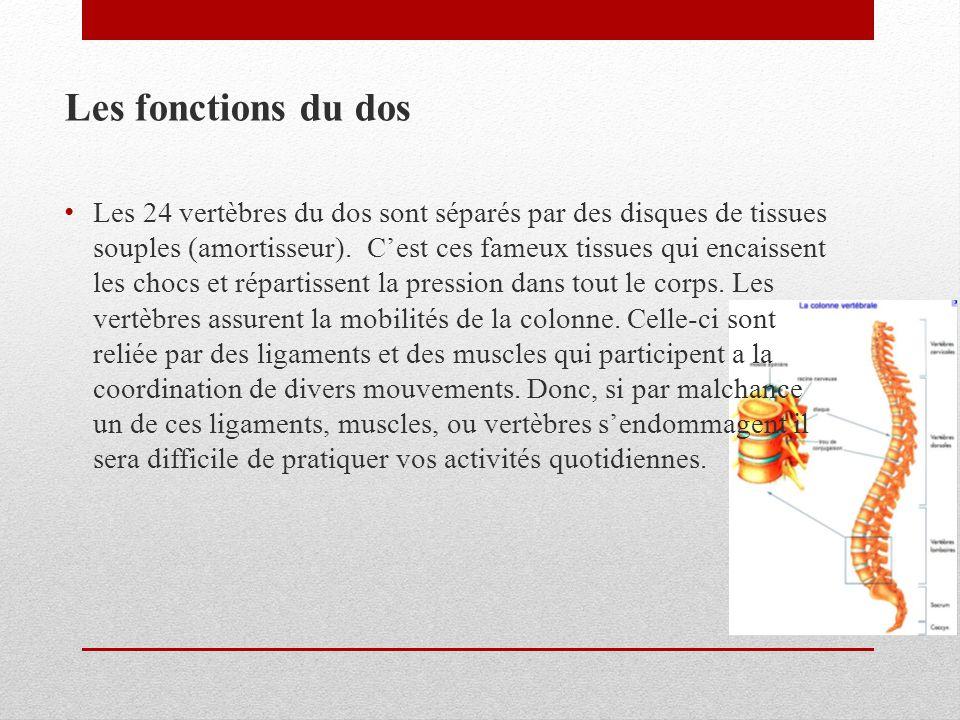Les fonctions du dos