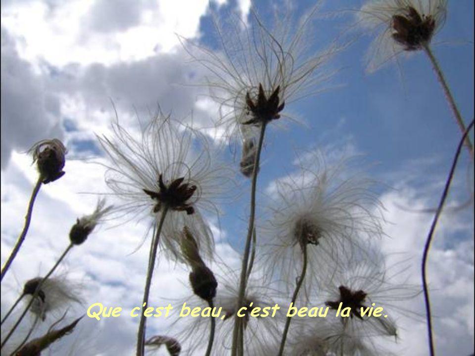 Que c'est beau, c'est beau la vie.