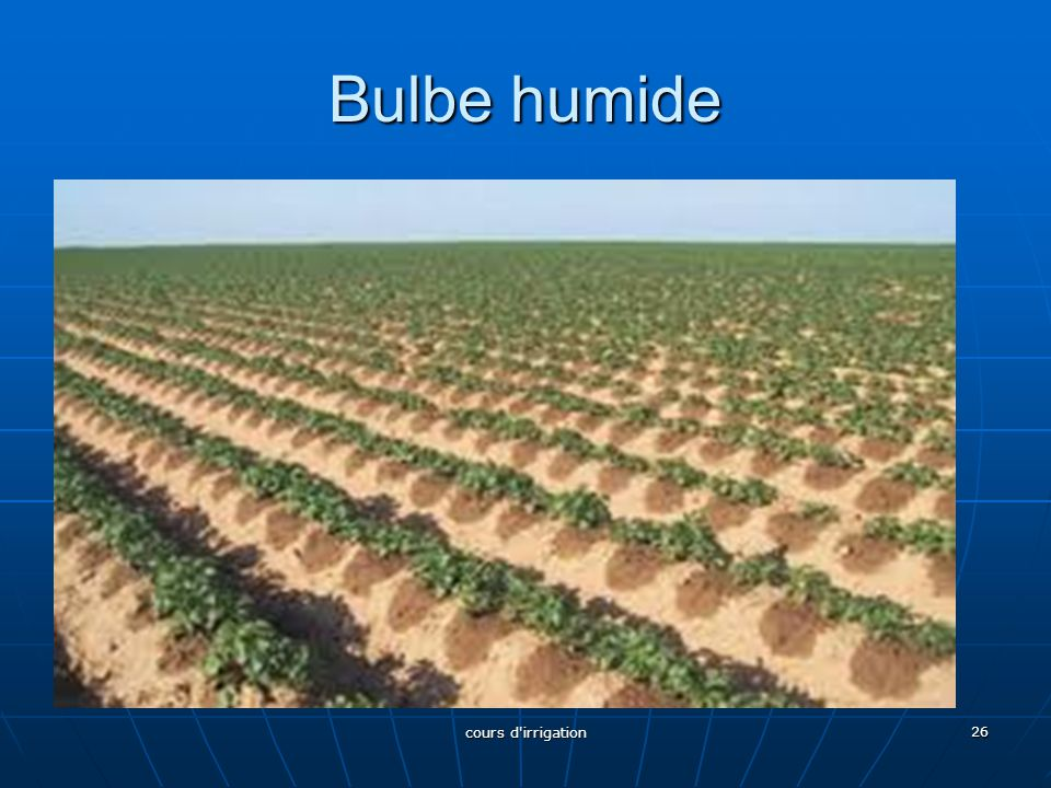 Bulbe humide cours d irrigation