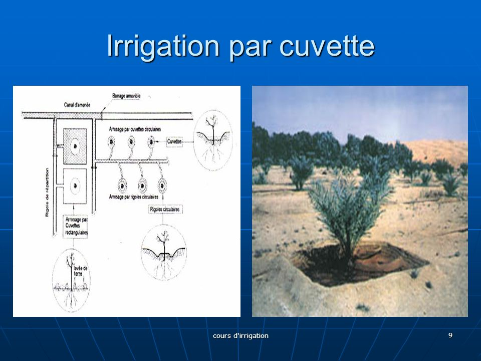 Irrigation par cuvette