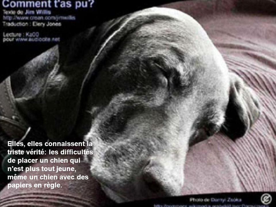 Elles, elles connaissent la triste vérité: les difficultés de placer un chien qui n est plus tout jeune, même un chien avec des papiers en règle.