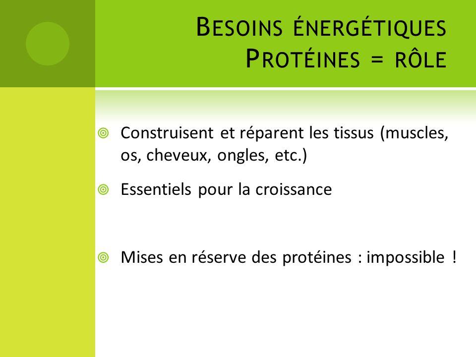 Besoins énergétiques Protéines = rôle