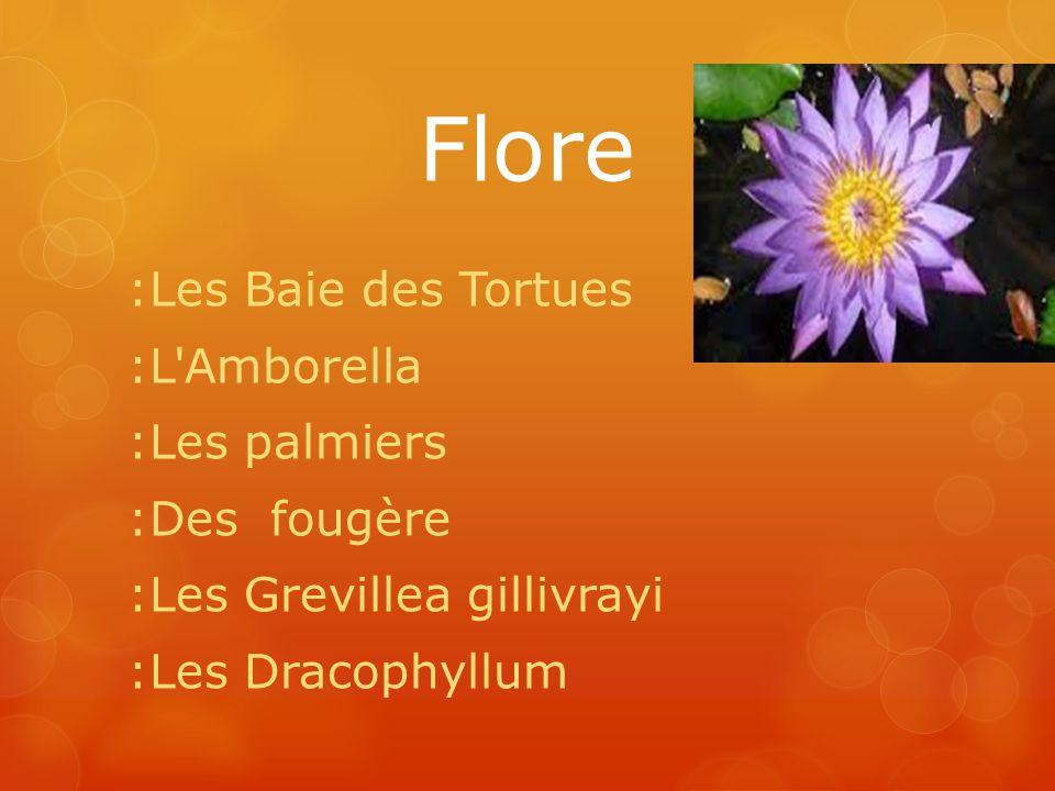 Flore :Les Baie des Tortues :L Amborella :Les palmiers :Des fougère