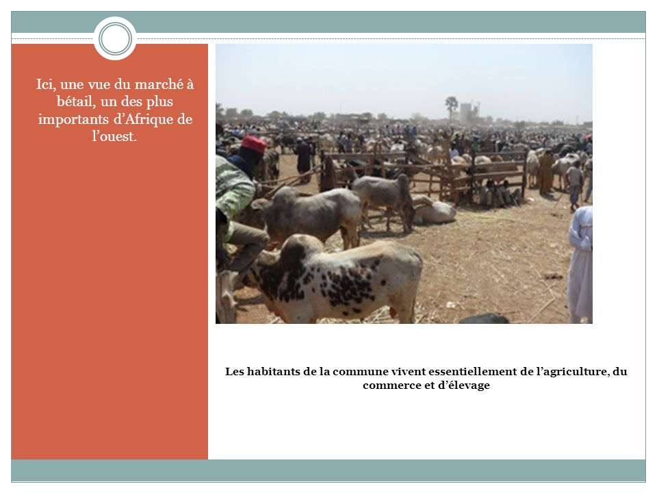 Ici, une vue du marché à bétail, un des plus importants d'Afrique de l'ouest.