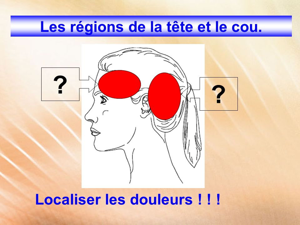 Les régions de la tête et le cou.