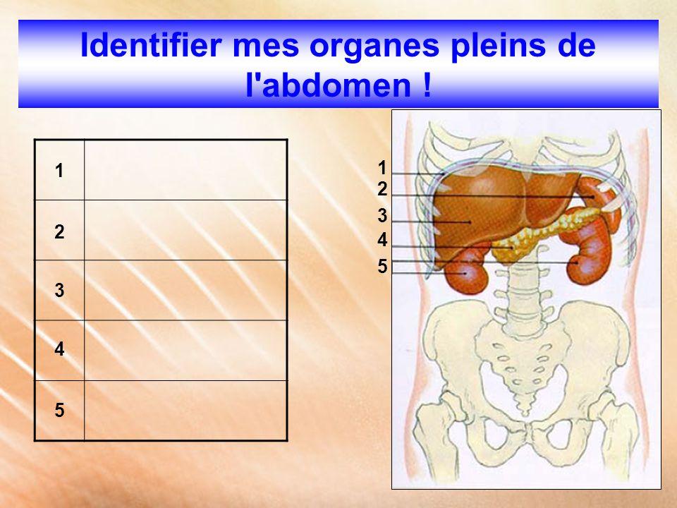 Identifier mes organes pleins de l abdomen !