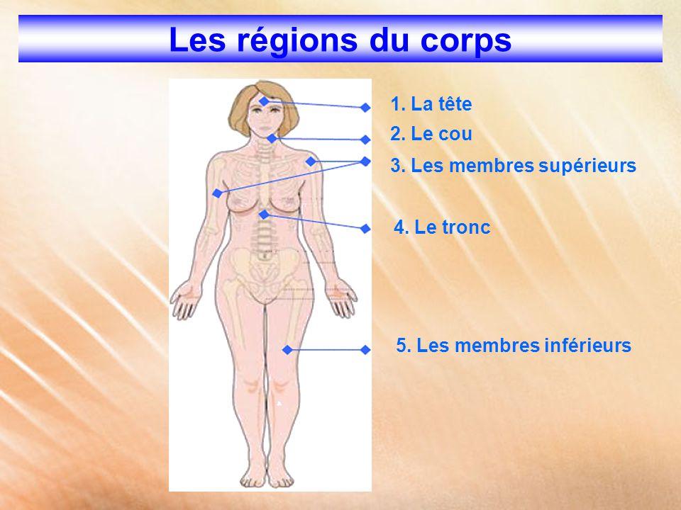 Les régions du corps 1. La tête 2. Le cou 3. Les membres supérieurs