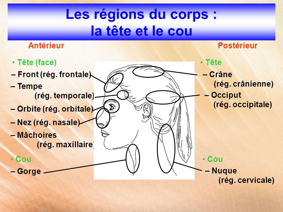 Les régions du corps : la tête et le cou