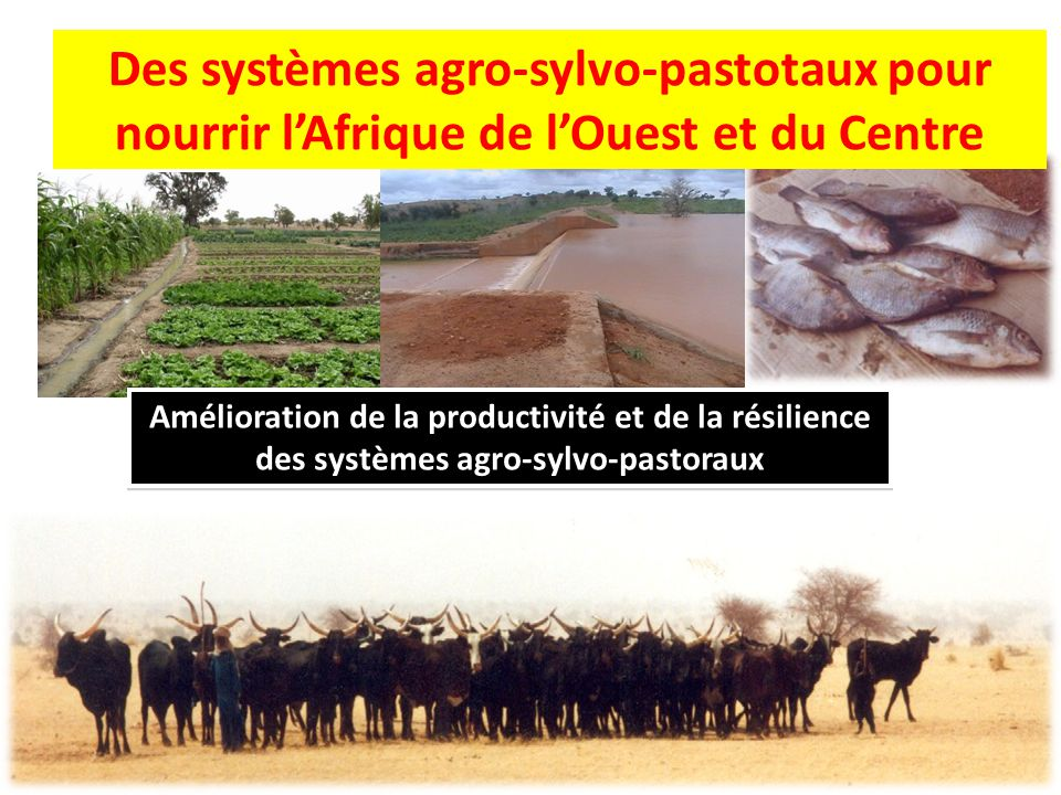 Des systèmes agro-sylvo-pastotaux pour nourrir l'Afrique de l'Ouest et du Centre