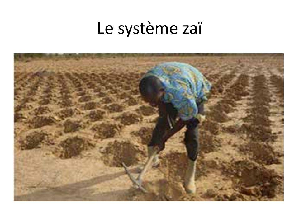 Le système zaï