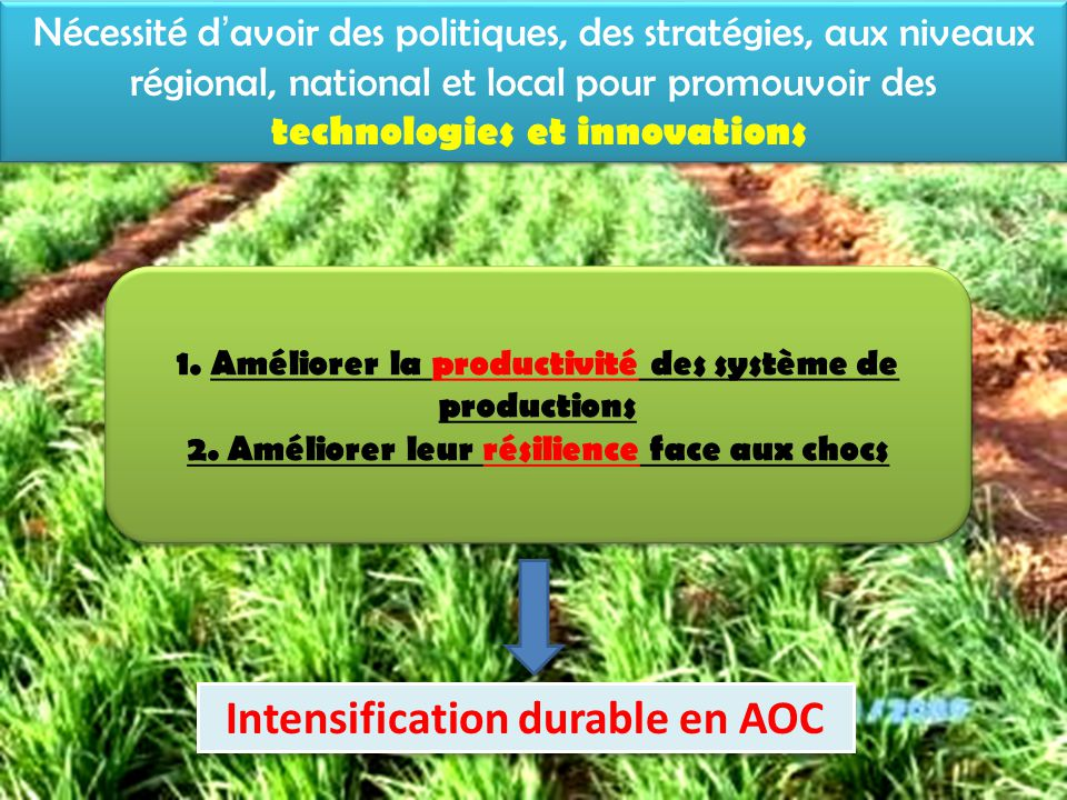 Intensification durable en AOC
