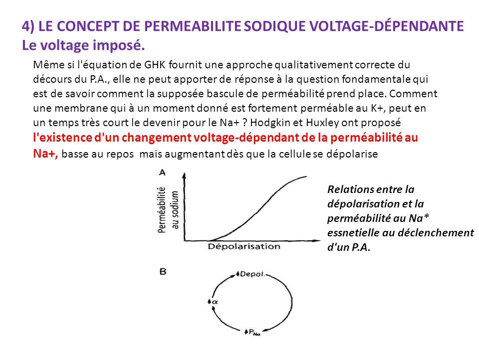 4) LE CONCEPT DE PERMEABILITE SODIQUE VOLTAGE-DÉPENDANTE