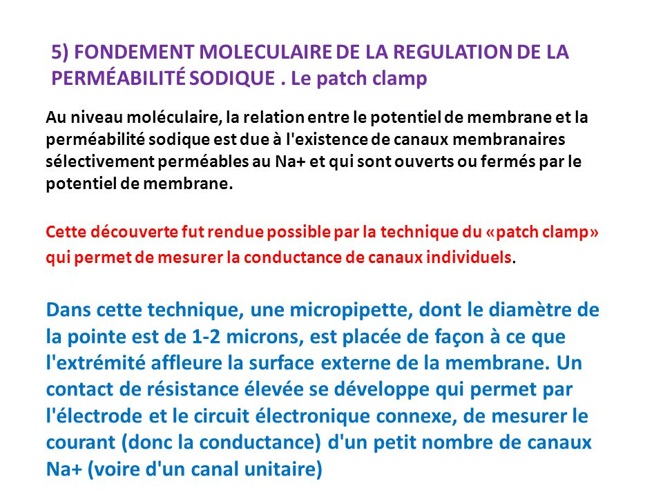 5) FONDEMENT MOLECULAIRE DE LA REGULATION DE LA PERMÉABILITÉ SODIQUE