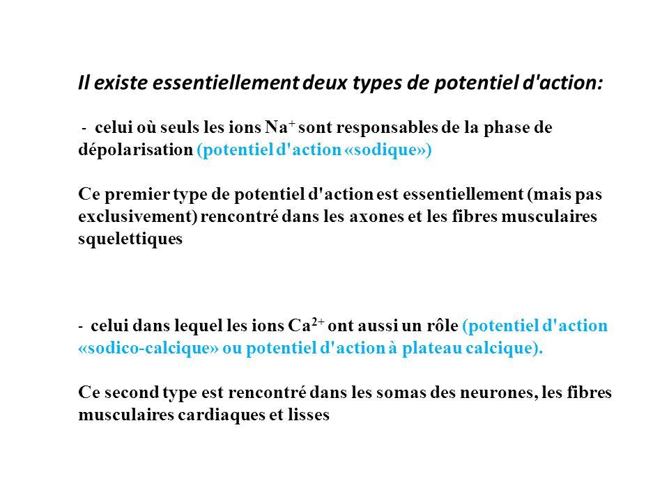 Il existe essentiellement deux types de potentiel d action: