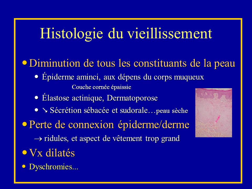 Histologie du vieillissement