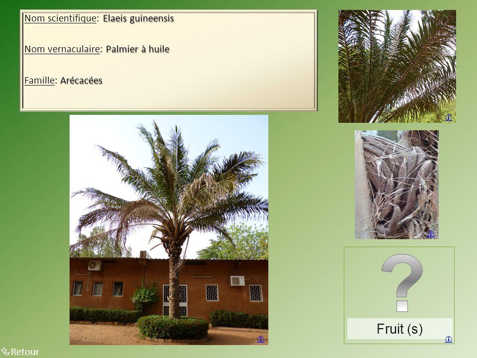 Fruit (s) Nom scientifique: Elaeis guineensis