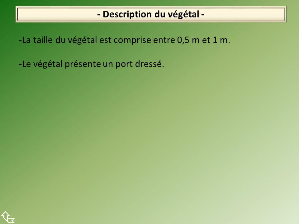 - Description du végétal -