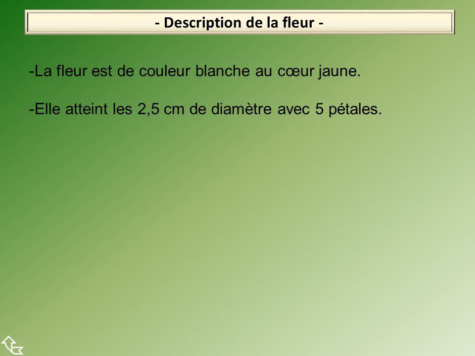 - Description de la fleur -