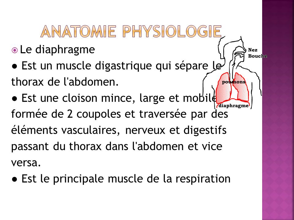 Anatomie physiologie Le diaphragme