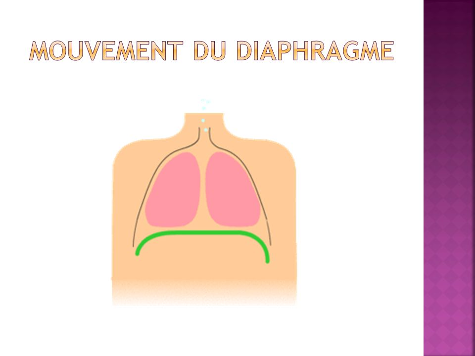 Mouvement du Diaphragme