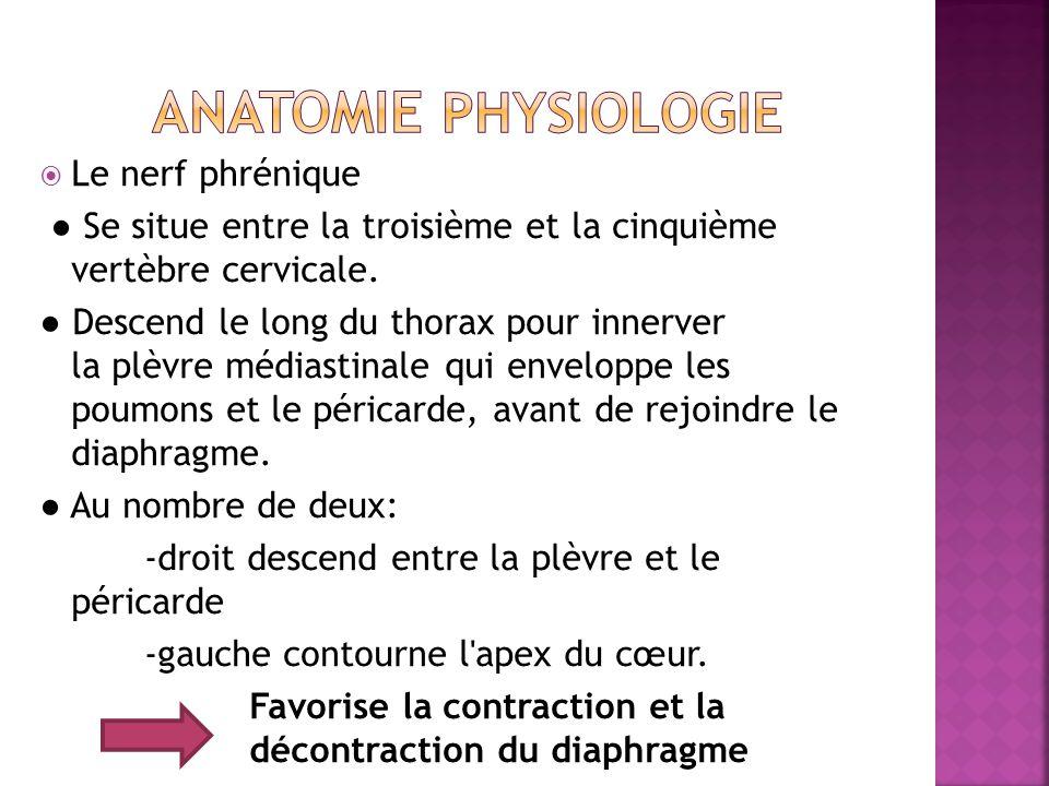 ANATOMIE PHYSIOLOGIE Le nerf phrénique