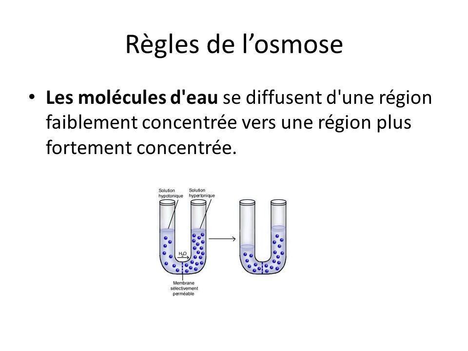 Règles de l'osmose Les molécules d eau se diffusent d une région faiblement concentrée vers une région plus fortement concentrée.
