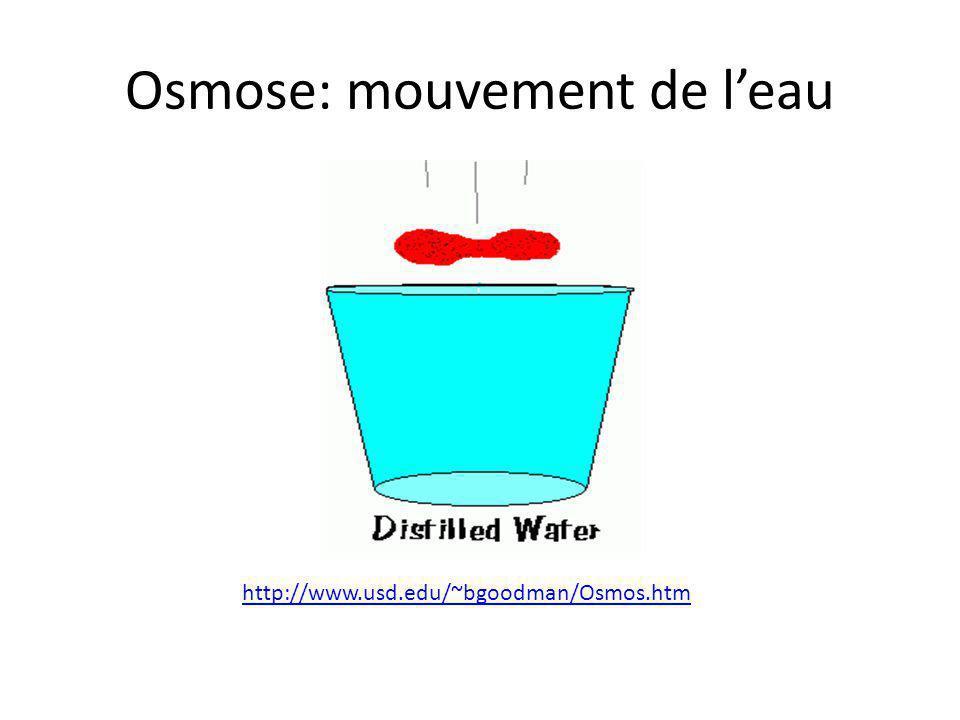 Osmose: mouvement de l'eau