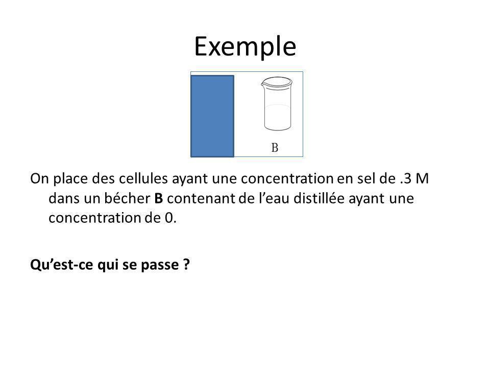 Exemple On place des cellules ayant une concentration en sel de .3 M dans un bécher B contenant de l'eau distillée ayant une concentration de 0.