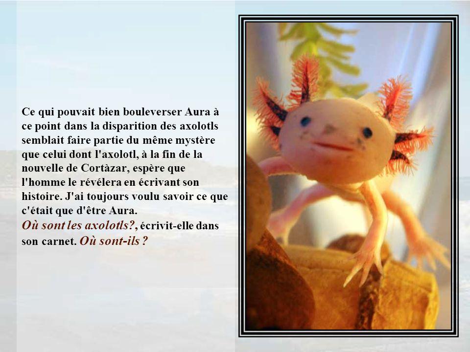 Ce qui pouvait bien bouleverser Aura à ce point dans la disparition des axolotls semblait faire partie du même mystère que celui dont l axolotl, à la fin de la nouvelle de Cortàzar, espère que l homme le révélera en écrivant son histoire.