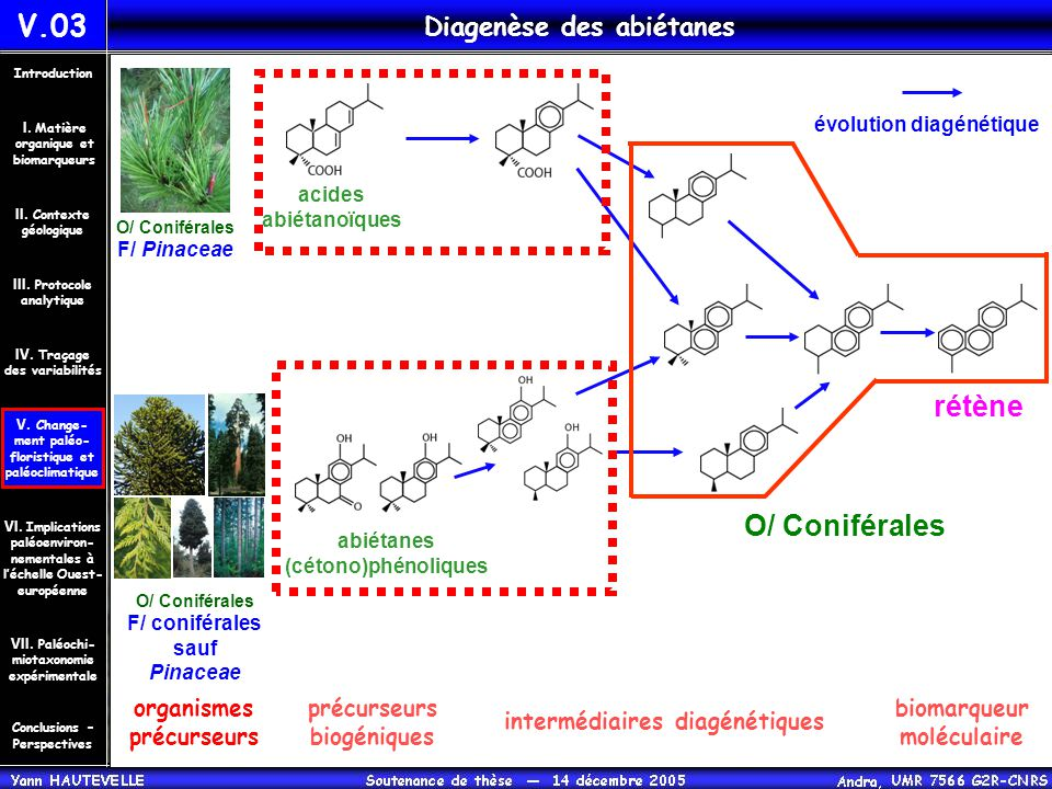 Diagenèse des abiétanes