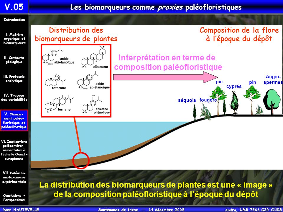 Interprétation en terme de composition paléofloristique