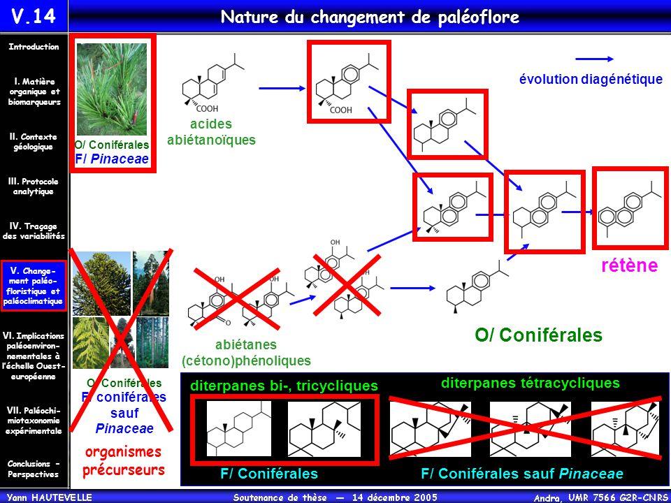 Nature du changement de paléoflore abiétanes (cétono)phénoliques