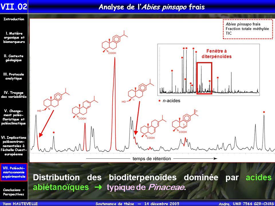 Analyse de l'Abies pinsapo frais