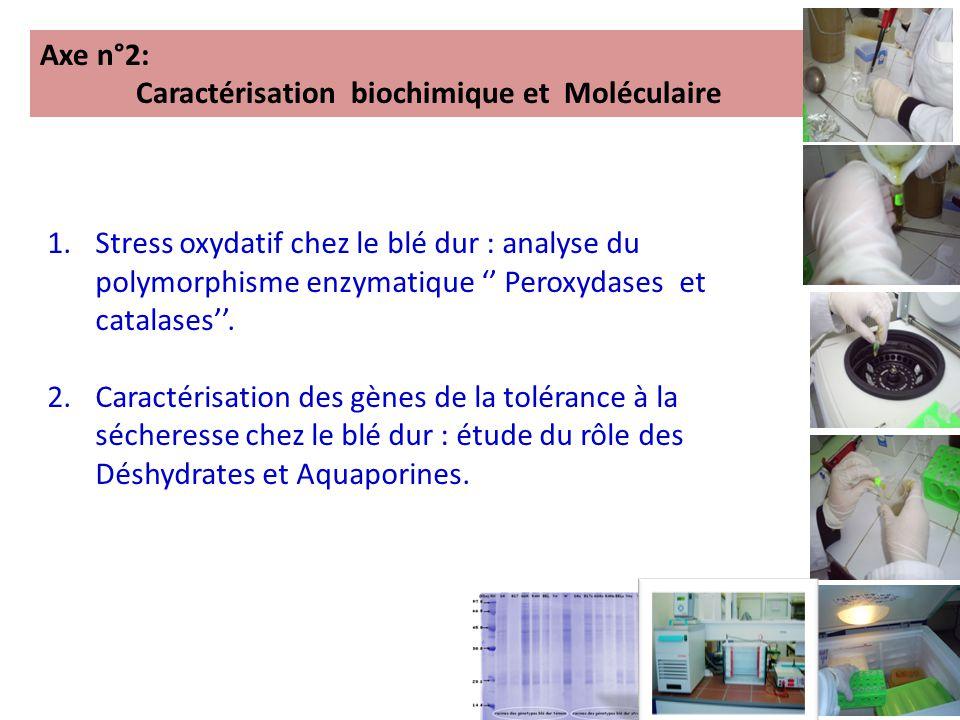 Axe n°2: Caractérisation biochimique et Moléculaire.