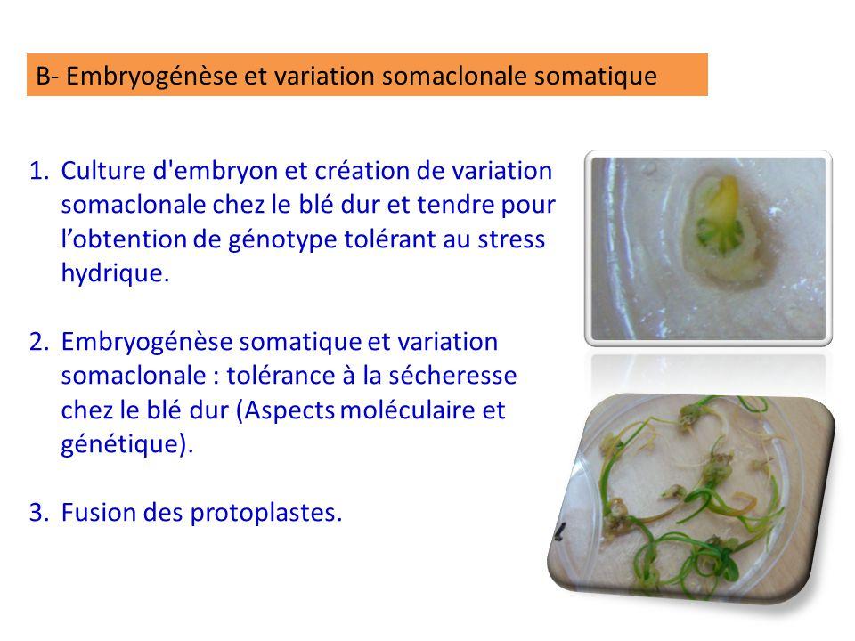 B- Embryogénèse et variation somaclonale somatique