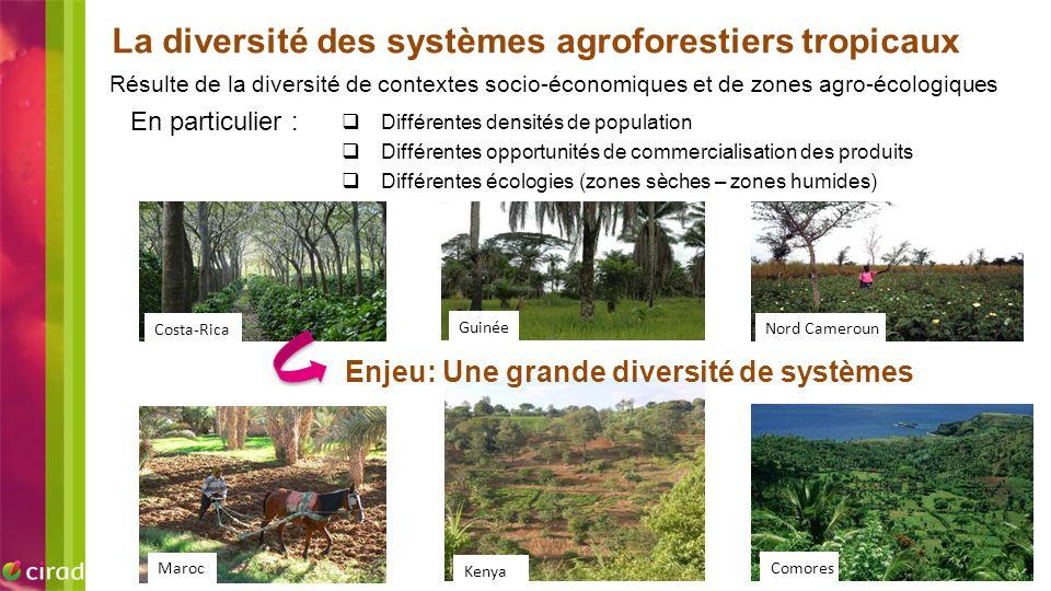 La diversité des systèmes agroforestiers tropicaux