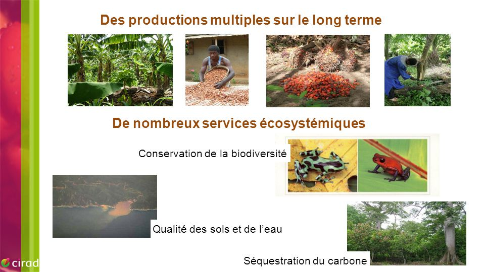 EXEMPLE D'IMAGE Des productions multiples sur le long terme