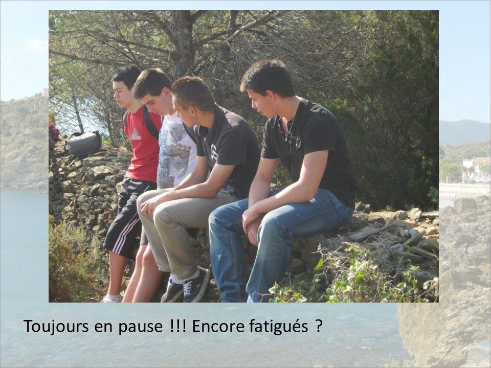Toujours en pause !!! Encore fatigués