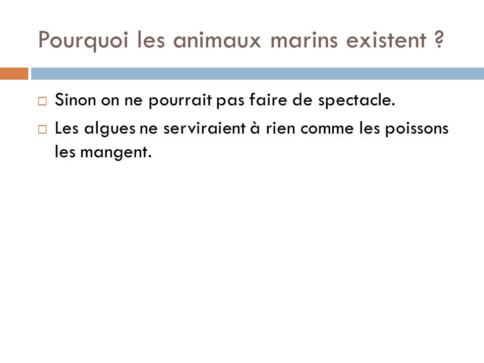 Pourquoi les animaux marins existent