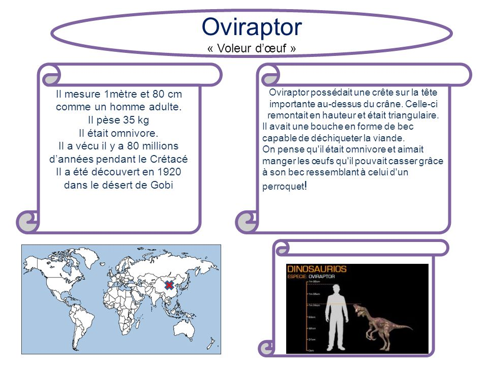 Oviraptor « Voleur d'œuf »