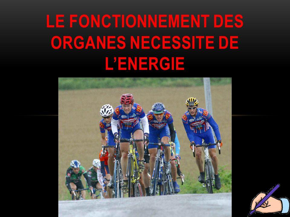 LE FONCTIONNEMENT DES ORGANES NECESSITE DE L'ENERGIE