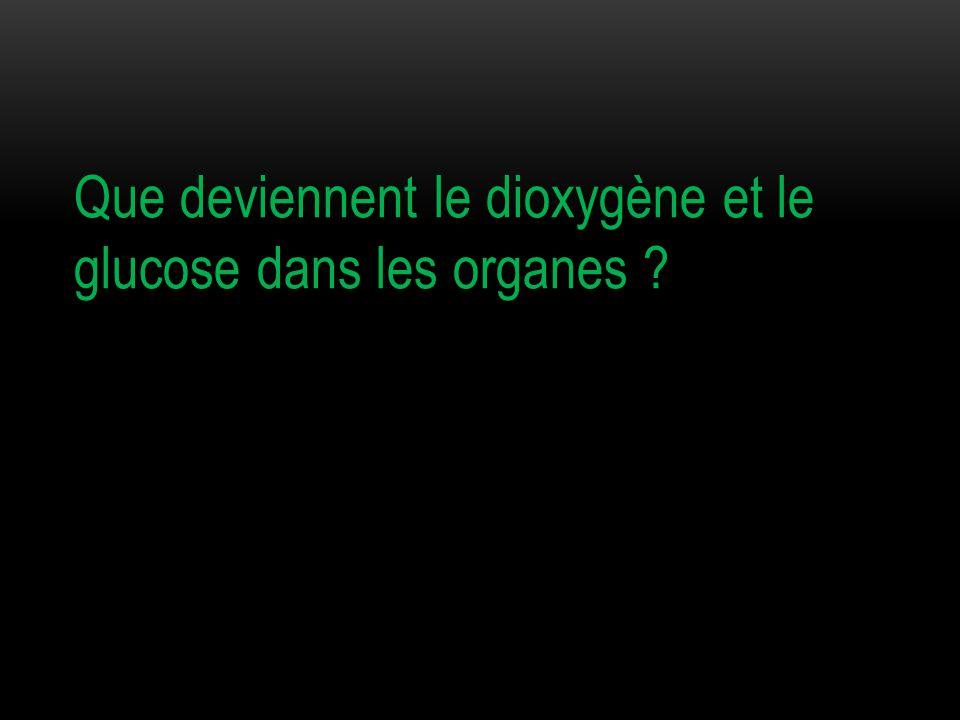 Que deviennent le dioxygène et le glucose dans les organes