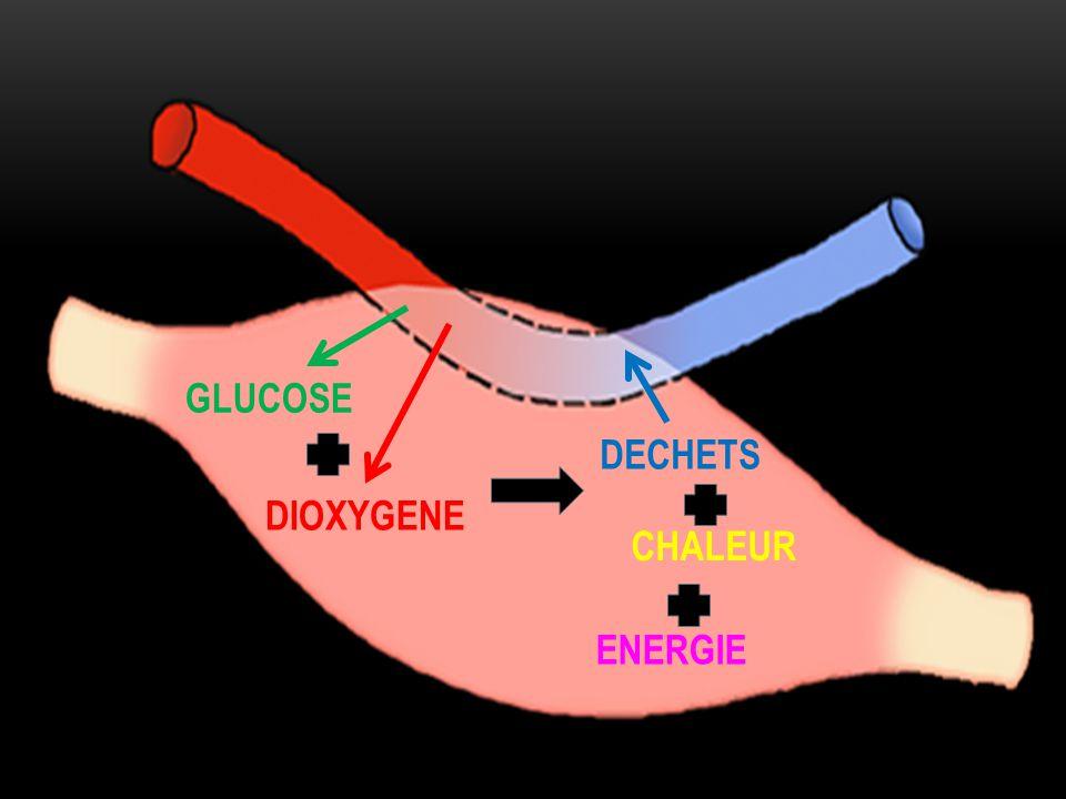GLUCOSE DECHETS DIOXYGENE CHALEUR ENERGIE