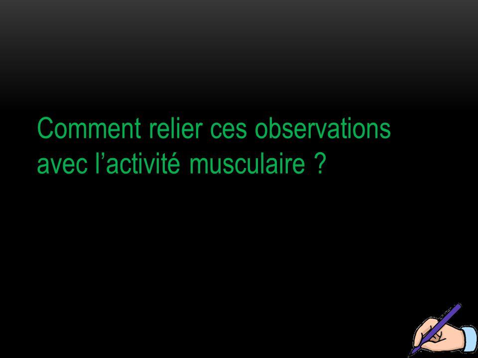 Comment relier ces observations avec l'activité musculaire