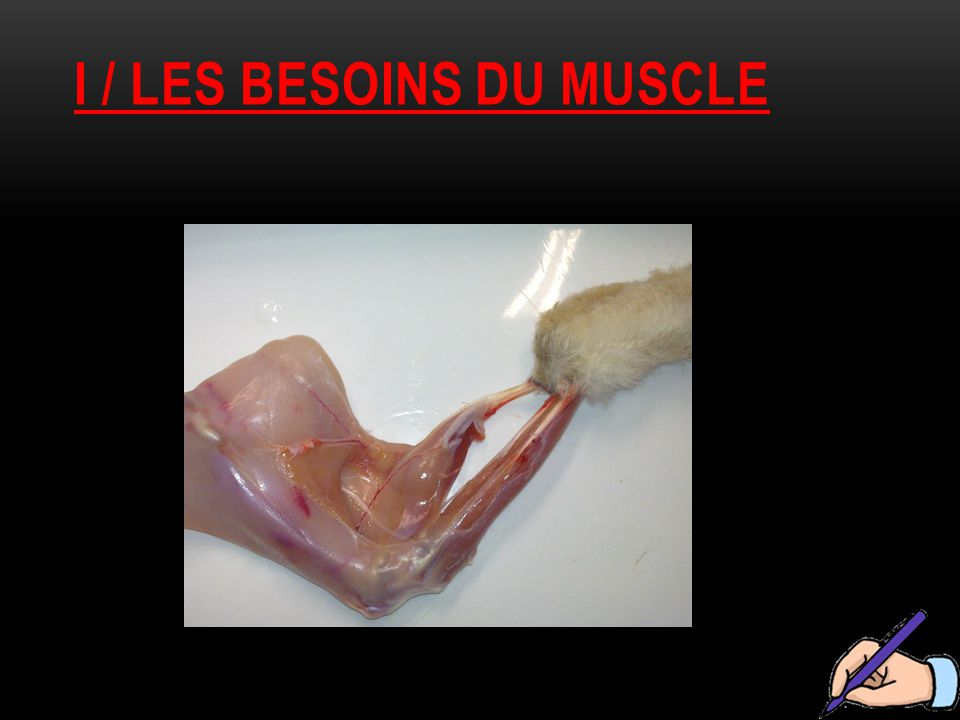 I / les besoins du muscle