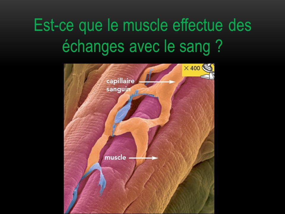 Est-ce que le muscle effectue des échanges avec le sang