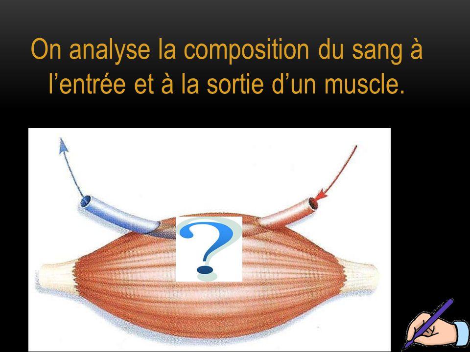 On analyse la composition du sang à l'entrée et à la sortie d'un muscle.