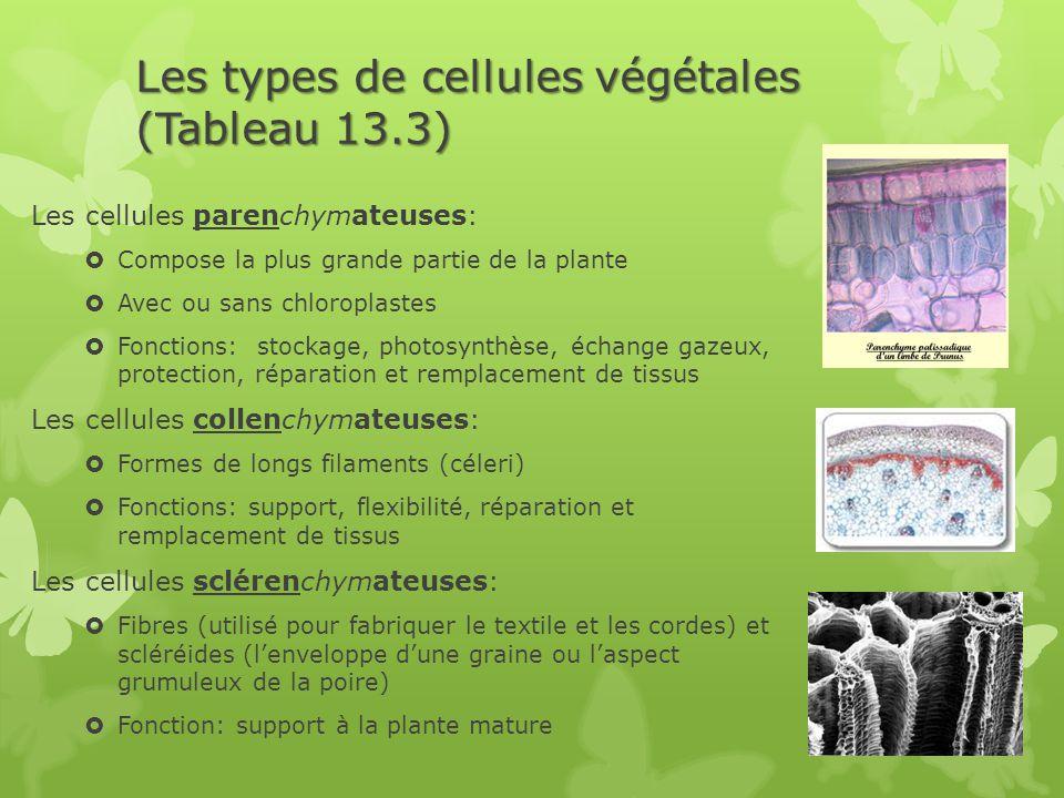Les types de cellules végétales (Tableau 13.3)